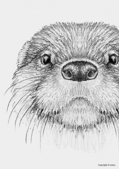 Entoo-poster-otter