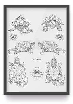 Entoo-poster-schildpad